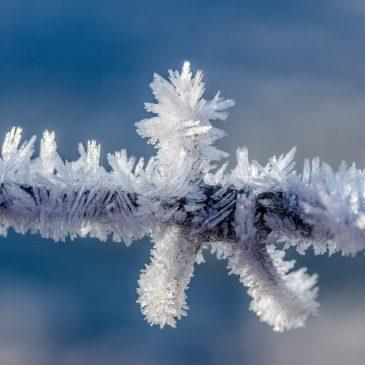 Frostpunkt